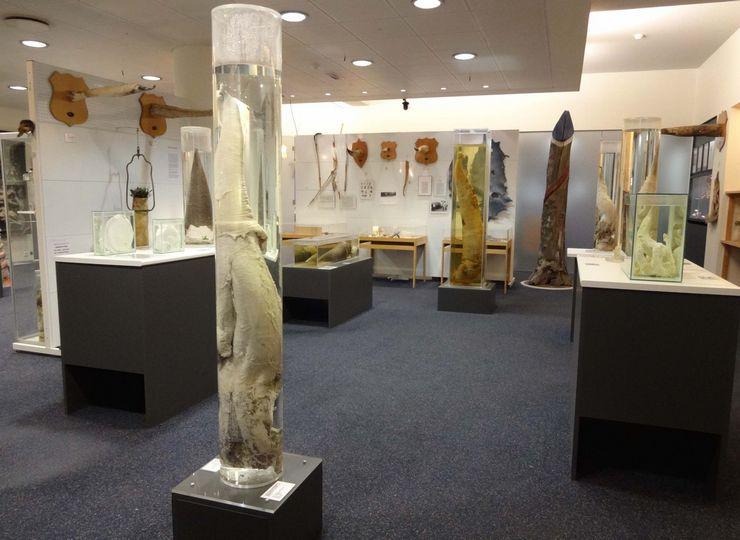 В течение жизни Сигурдур Хъяртарссон собирал половые члены разных животных. Выйдя на пенсию, открыл музей фаллосов