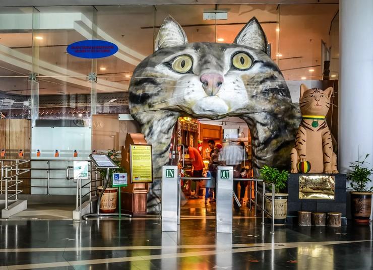 Выставка рассказывает о породах кошек, их привычках и повадках.